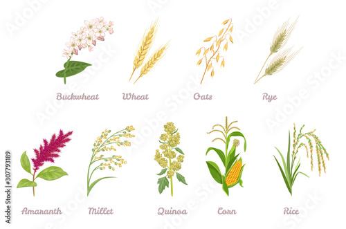 Cereal Plants  set Wallpaper Mural