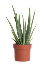 Aloe Vera In Flowerpot Isolate...