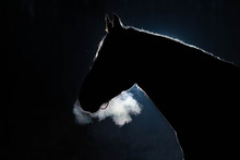 Portrait Of An Adult Horse Aga...