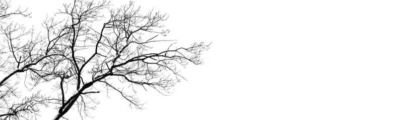 bare tree branches on white. black and white natural pattern. oak branches in winter. copy spaces