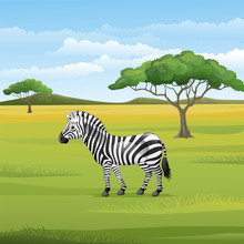 Cartoon Zebra Standing In The ...