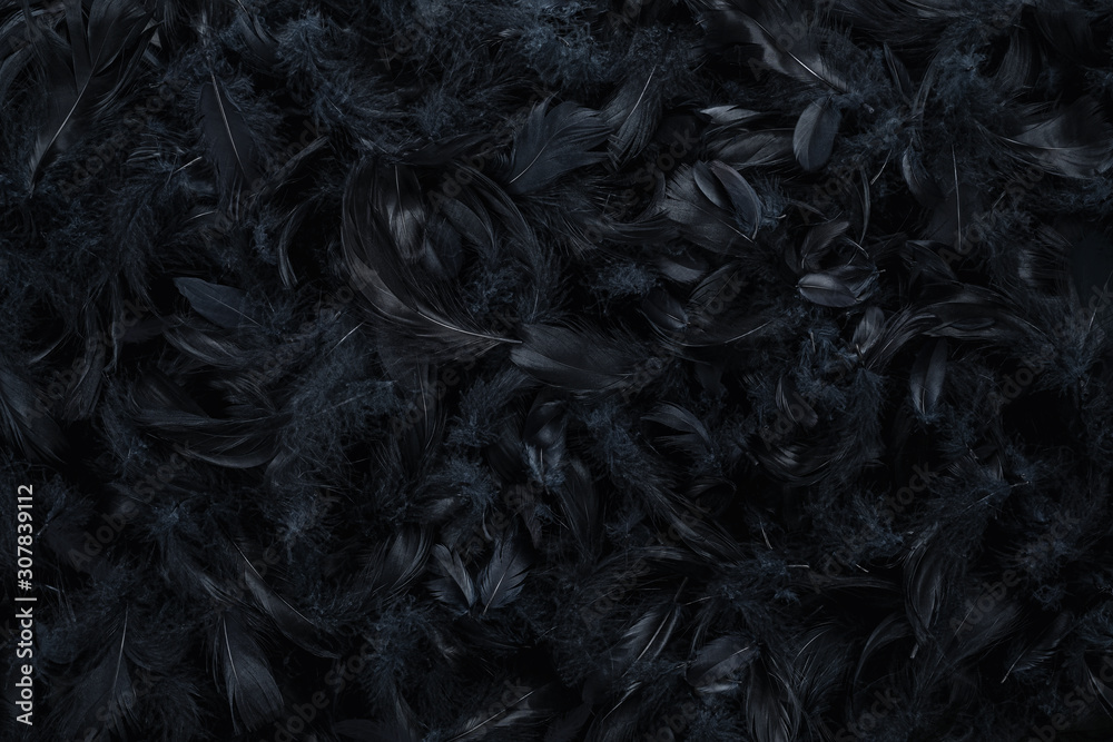 Abstract black feather background, texture with copy space