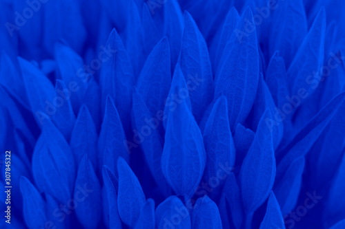 Natural plant buds tinted in blue,soft focus