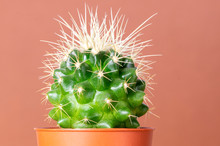 Beautiful Cactus With Large Th...