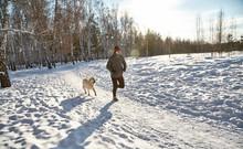 Labrador Retriever Dog For A W...