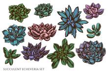 Vector Set Of Hand Drawn Colored Succulent Echeveria