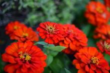 Beautiful Flowers In The Garde...