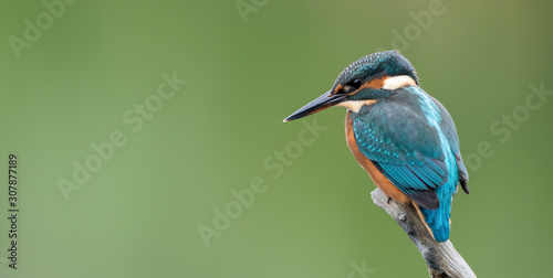 Valokuva Kingfisher On Perch
