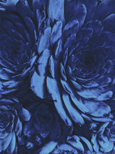 Classic Blue Color 2020 Year Colored Flower Plant. Succulent Background.