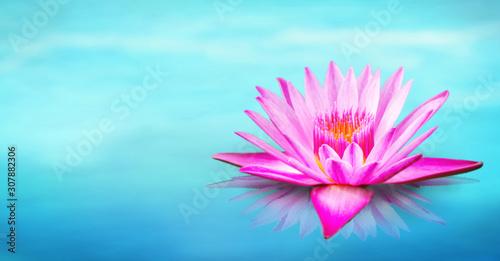 Deurstickers Waterlelies Lily water on the lake, Pink lotus flower on the water in the morning