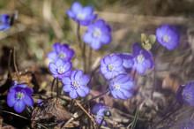 Gentle Purple Forest Flowers ...