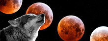 Wolf With A Bloodmoon In Backg...