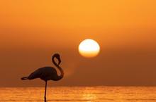 Wild African Birds. Silhouette...