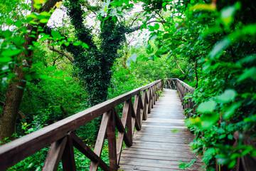 Fototapeta Mosty wooden bridge road in a rainforest landscape
