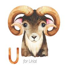 Watercolor Animals Alphabet.Le...