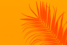 Abstract Palm Leaf With Space ...