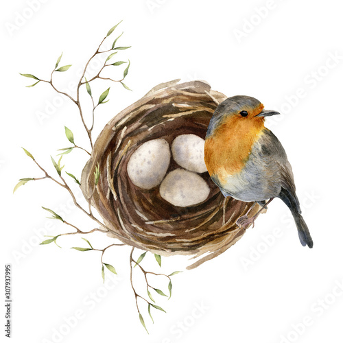 Fototapeta Watercolor easter card with bird and nest. Hand painted spring nest with eggs, feathers and branch isolated on white background. Holiday wildlife illustration for design, print or background. obraz