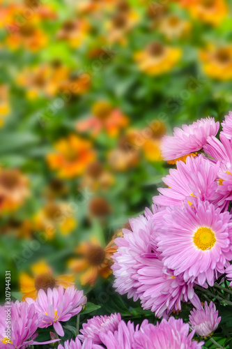 Fototapety, obrazy: Beautiful bouquet of bright pink flowers on yellow background