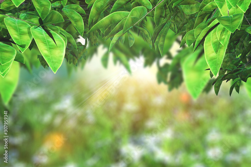 Canvas Prints Olive 3D leaves on a defocussed sunny landscape