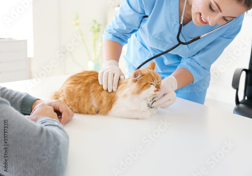fototapeta na drzwi i meble Owner with cat visiting veterinarian in clinic