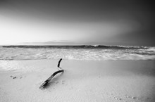 Slow Exposure Of A Large Branc...
