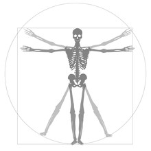 Medical, Health, Human Body, Skeleton Image Illustration. X-ray Photo, Illustration Of A Person Drawn By Leonardo Da Vinci. A Beautiful Figure, A Vitruvian Character.