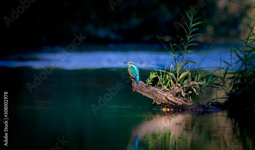 Valokuva Beautiful nature scene with Common kingfisher Alcedo atthis
