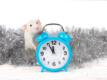 Cute White Rat Standing Behind A Clock Showing Almost Midnight As A Symbol Of The 2020 New Year Of The White Metal Rat (against The White Wooden Background And Silver Tinsel)