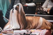 Dog Hairdresser Lhasa Apso Shi...