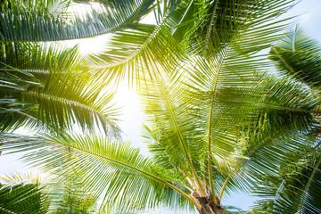 Panel Szklany Optyczne powiększenie tropical palm leaf background, coconut palm trees perspective view