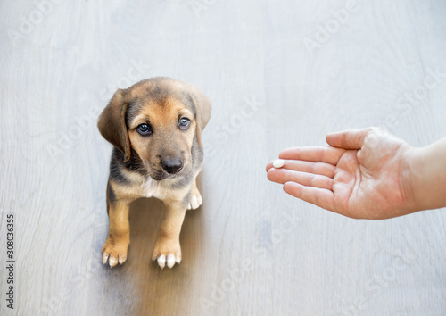 Photo Pet owner's hand reaching out to give his dog a pill / tablet.