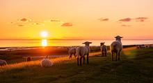 Abendrot Sonnenuntergang An Der Nordsee