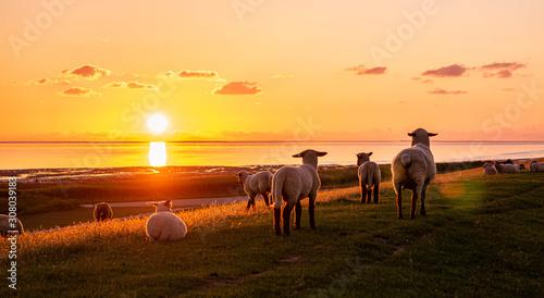 Obraz Abendrot Sonnenuntergang an der Nordsee  - fototapety do salonu