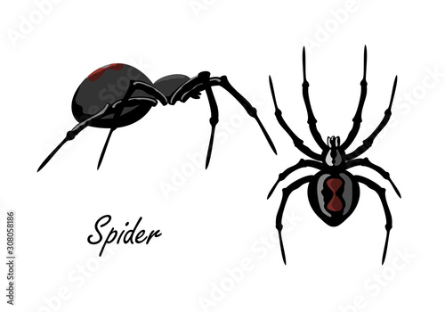 Spider isolated on white backdrop set Canvas Print