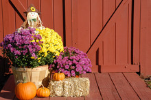 Fall Decoration Of Chrysanthemums, Scarecrow And Pumpkins Sitting In Front Of Red Barn Doors. Outside Fall Arrangement