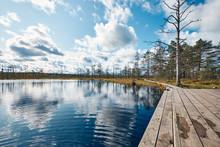 The Landscape Around Viru Bog, Lahemaa National Park, Estonia