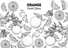Orange Hand Drawn Package Design. Vector Illustration. Orange Sketch For Menu Design, Brochure Illustration. Black And White Design. Citrus Orange Frame Illustration. Can Used For Packaging Design.