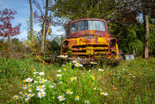 Old Yellow Truck On Farm