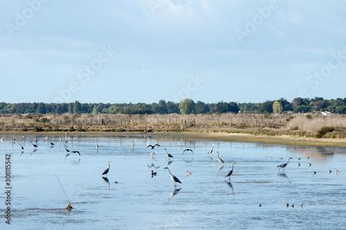 Réserve Naturelle Nationale de Lilleau sur l'Ile de Ré Fototapeta