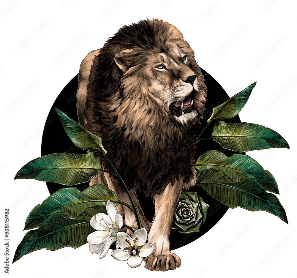 Fototapeta full-length lion walking on background composition of tropical plant leaves and flowers, sketch vector graphics color illustration on white background
