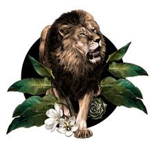 Full-length Lion Walking On Ba...