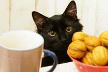 Cat With Cookies In The Kitchen.