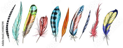 Valokuvatapetti Set of ten bird feathers, full color sketch