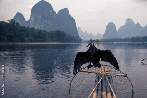 Photo The great cormorant, black fish-eating bird in Guilin China