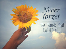 Inspirational Motivational Quote - Never Forget The Hands That Raised You. With Background Of Blue Sky And Beautiful Sunflower Blossom In Hand. Photo Concept With Nature.