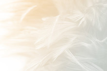 Beautiful White Feather Pattern Texture Background With Orange Light