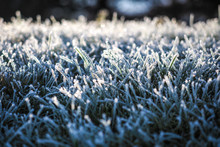 Winter Wonderland, Morning Frost On The Grass