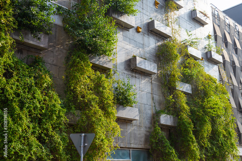 Fototapeta Green plants on a concrete wall. Landscaping of the city. Malmo. Sweden. obraz