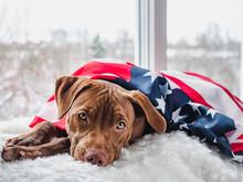 Pretty, Charming Puppy Of Choc...