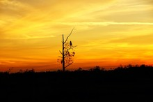 Silhouette At Sunset Of A Bird On A Tree